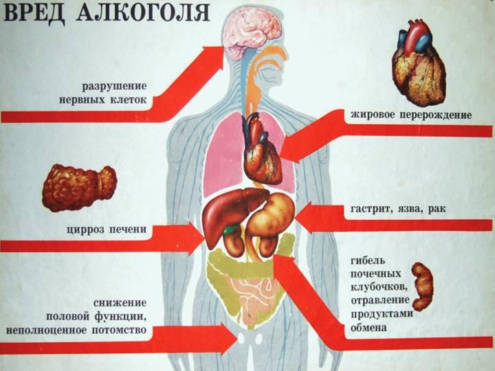 Что происходит когда в организм попадает алкоголь?